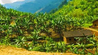 rwanda-forest