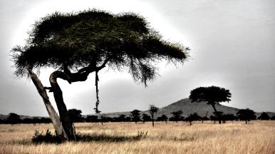 serengeti-corpse